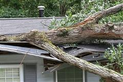 House tree damaged